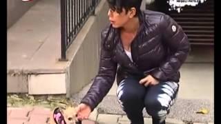Chihuahualar - Ev köpekleri Eğitimi