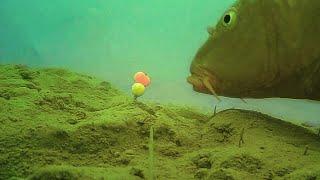 Ловля карпа на мини бойлы ЗИМОЙ подводная съёмка