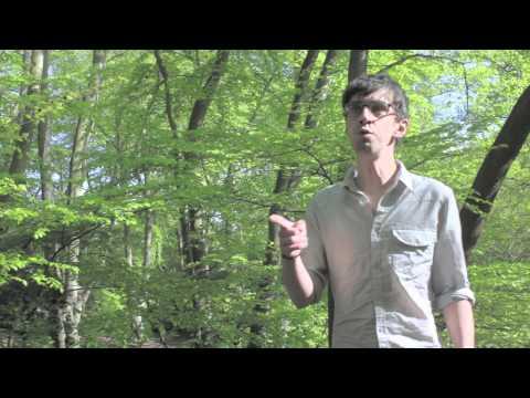 TIGERCATS  - Harper Lee