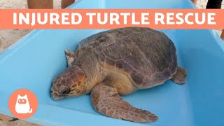 NOBODY Believed This 3-LEGGED TORTOISE Would SURVIVE 🐢💔