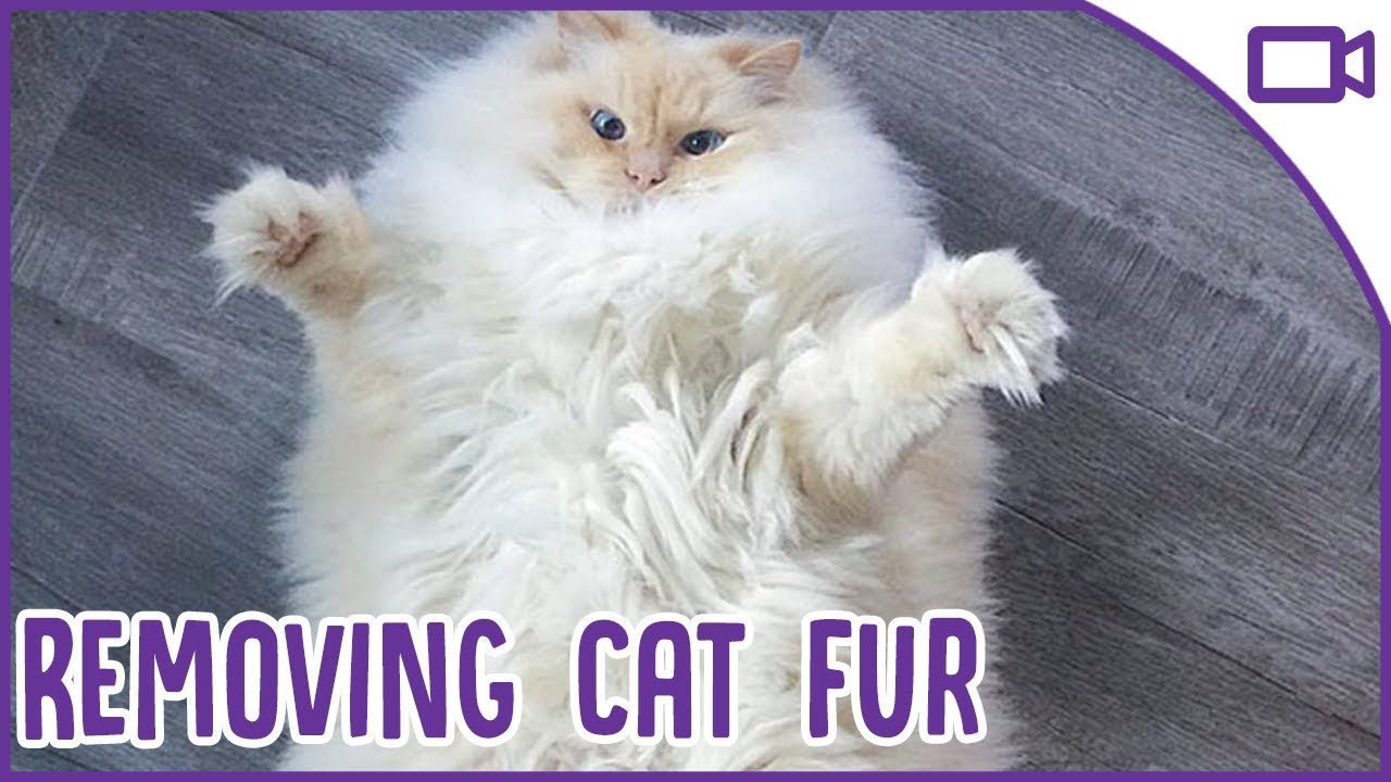 Cat Hair From Clothes And Furniture