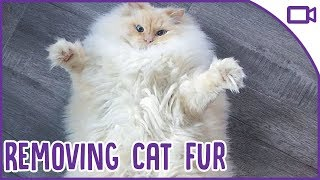 The BEST Ways to Remove Cat Hair from Clothes and Furniture! thumbnail