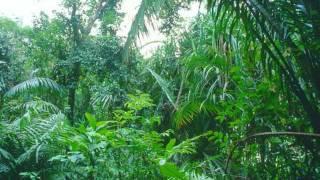 Sash! - Rainforest