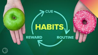 How Habits Change Your Brain