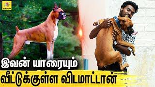 Boxer னு பேர் வந்ததுக்கு காரணம் இது தான்.. : All About Dogs Episode  4 | Boxer