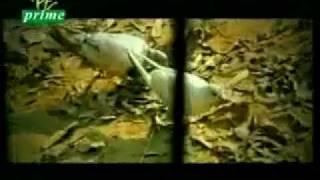 Pakistani Super Hit Sad Song Punjabi - YouTube.flv