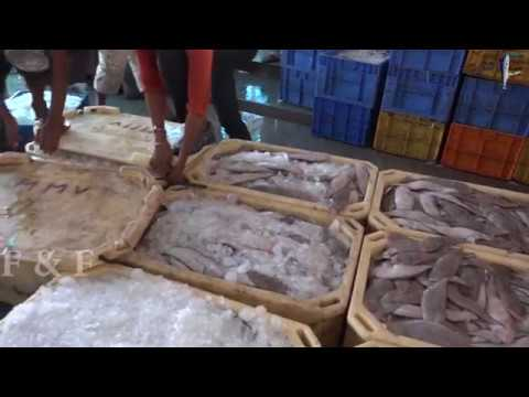 How To Pack Fish For Export -Odisha Fish Market