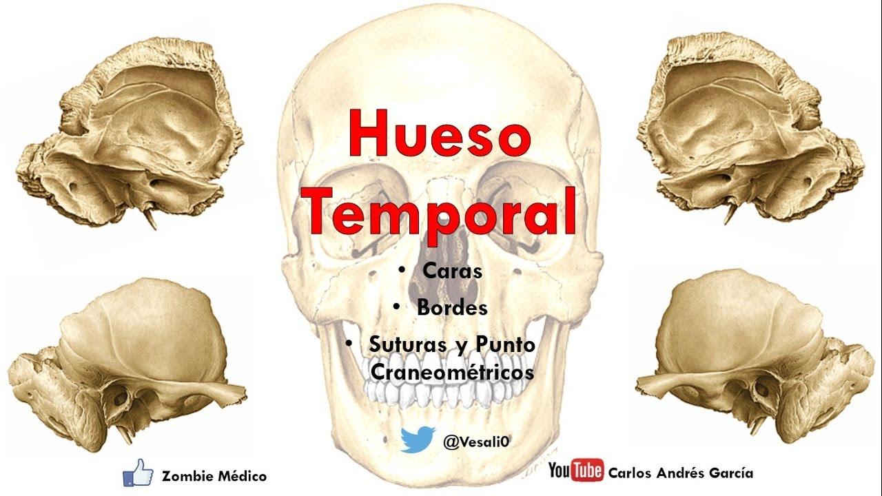 Anatomía - Hueso Temporal (Escama, Peñasco, Procesos Mastoideos ...
