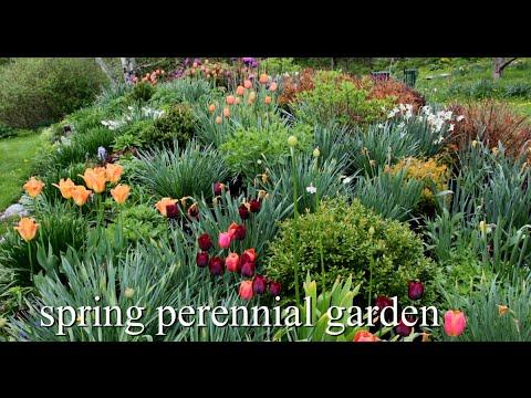 Spring Perennial Garden