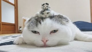 Cute is Not Enough - Funny Cats and Dogs Compilation #16