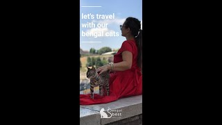 Let's travel with our bengal cats