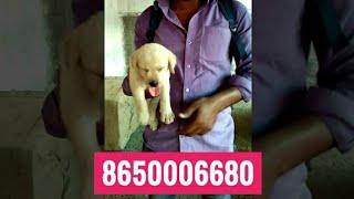 Arrah ( Ara ) Patna Bihar Customer feedback for Rohit Pet Care Dog kennel in uttar Pradesh India