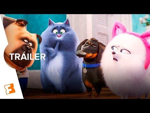 La Vida Secreta de tus Mascotas 2 - Tráiler Final (Español Latino)