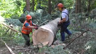 Praca w lesie 2015 BIESZCZADY