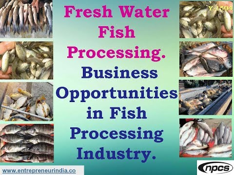 Fresh Water Fish Processing. Business Opportunities In Fish Processing Industry.