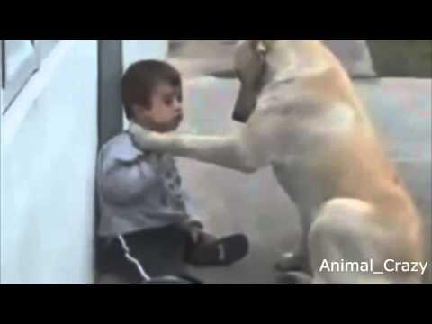 vídeo-emocionante---veja-o-amor-entre-um-cachorro-e-seu-dono