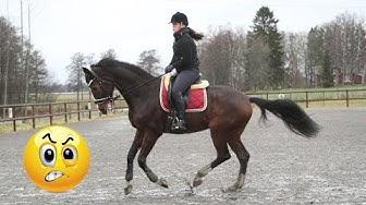 Rid hästen i en korrekt form!