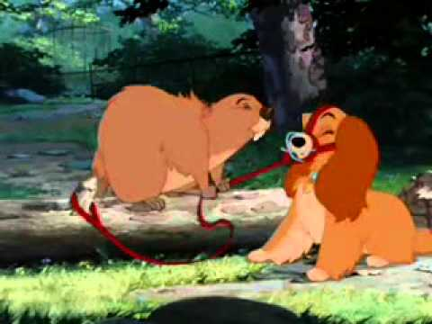 Lady and the Tramp Beaver  YouTube