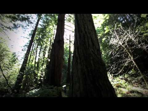 Half Moon Bay, California - Redwood Region
