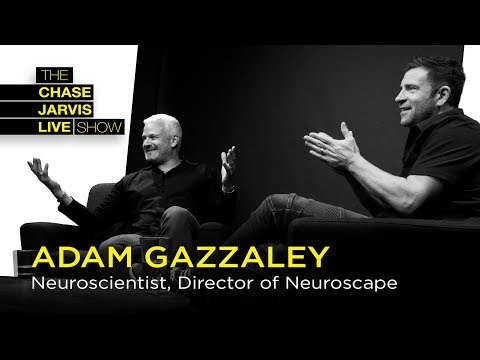 Tame Your Distracted Mind with Neuroscientist Adam Gazzaley