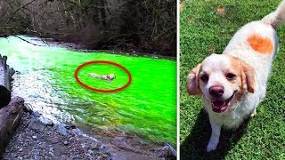 3-dogs-swam-in-this-river-then-died-2-hours-later-this-is-what-happened