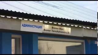 Опыт г.Одессы в решении проблемы бездомных животных(, 2014-01-19T20:47:56.000Z)