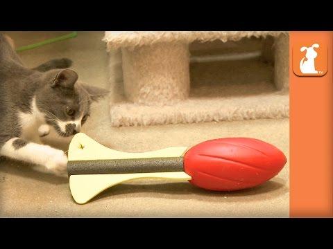 Kitten Plays Football Very Well, Basically Friday Night Lights - Kitten Love