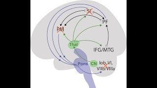 Spinocerebellar Ataxia Types 2 and 10.