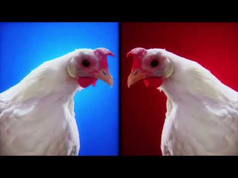 Techno Chicken Song Remix 1 Hour