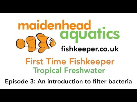First Time Fishkeeper Episode 3: An Introduction To Filter Bacteria