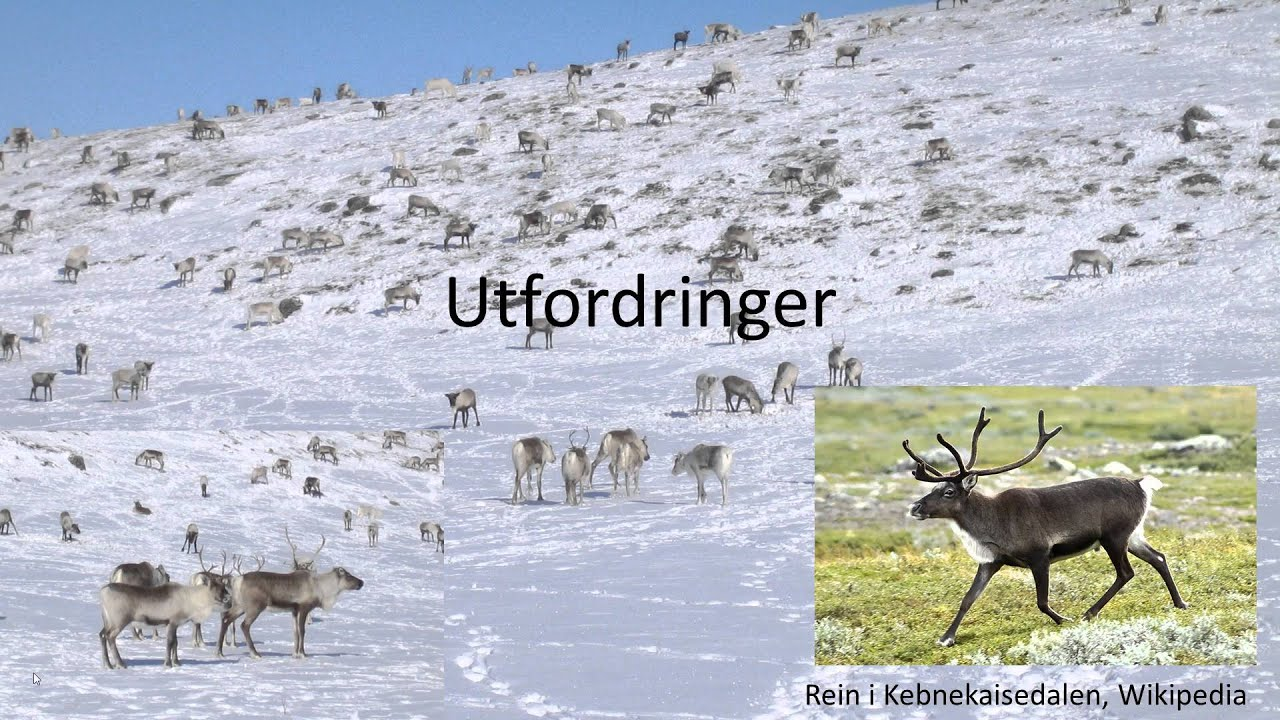 Geografi GEO1001 - Samisk reindrift i Norge
