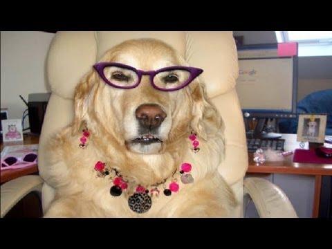Make Money Online - Smart Dog Exposes Making Money Online Secrets!