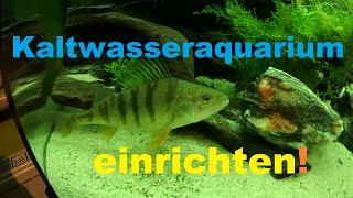 Kaltwasseraquarium mit Flussbarschen, Rotfedern und Lauben einrichten! Juwel Vision 450 Liter