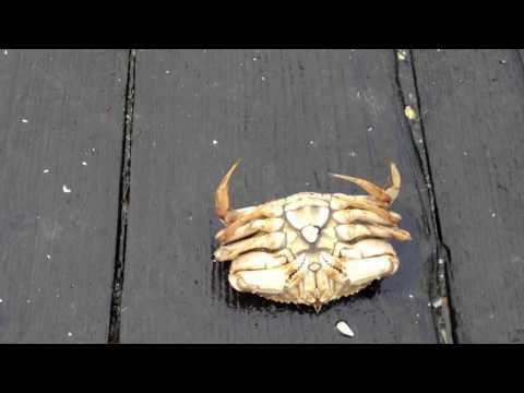 Clamhawk - The BEST clam gun on the beach!!   Doovi