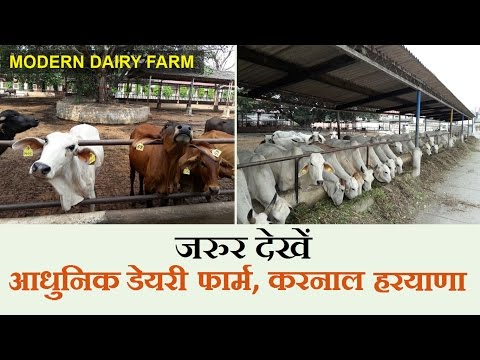 Modern dairy Farm in India - NDRI Karnal, Haryana - (Must Watch) | India Dairy Farming