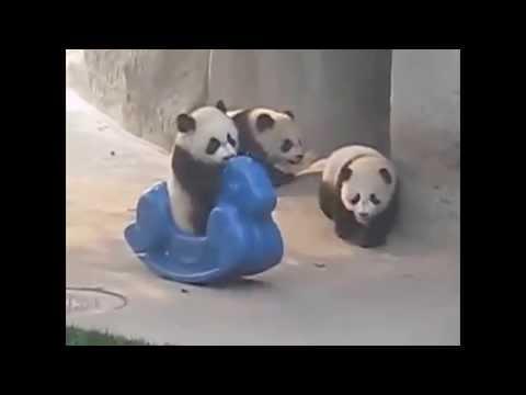Панды видео панда говорит очень смешно