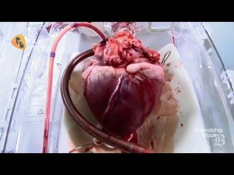 7 Amazing Facts You Don't Know About your Heart ! (3D Animation )
