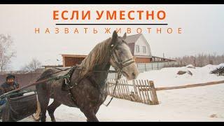 Орловский рысак - талисман Алтая
