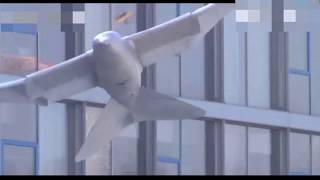 Top 3 Smart Birds | Drone Birds | New Science Invention | That Will Amazed You Sure| 2018