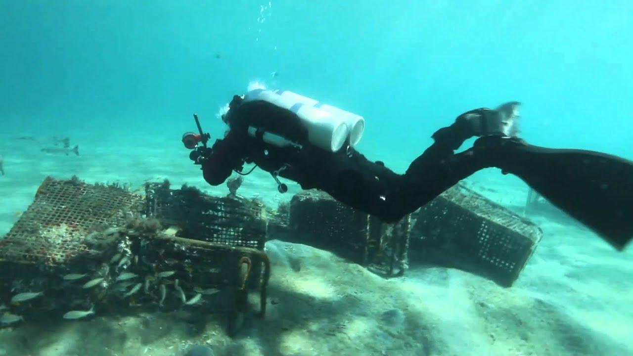 Reverse Kick for Diving