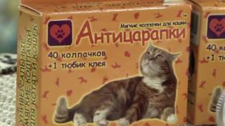 видео Антицарапки для кошек