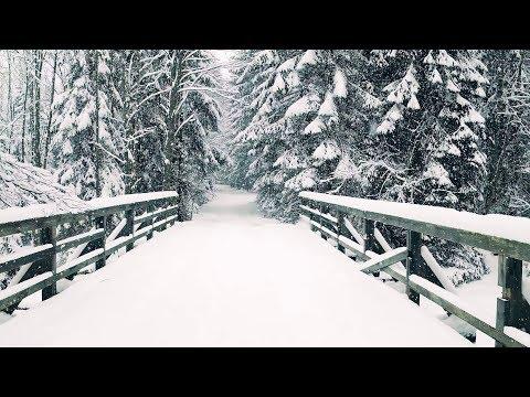Snow Covered Ground 2019 [4K] (LESOZAVODSK)
