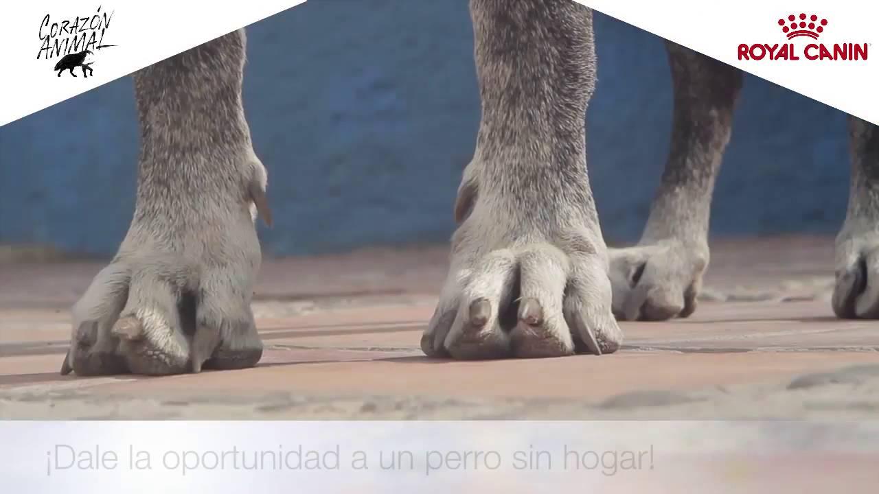 Héroes Royal Canin- 3º Episodio