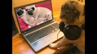 Funny Pug Slideshow 2