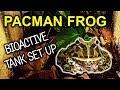 - Pacman Frog Set Up | Bioactive Tank Set Up For My Pacman Frog