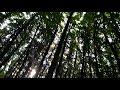 Кто прячется в лесу в конце августа