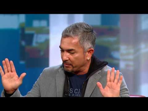George Tonight: Cesar Millan   George Stroumboulopoulos Tonight   CBC