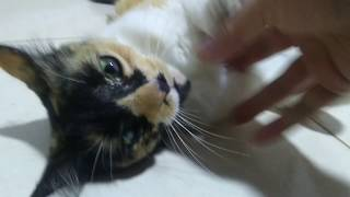 Pachita Pachita la gatica