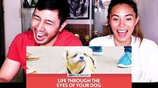 Jaby's Favorite Filtercopy Video! | Life Through The Eyes of Your Dog!