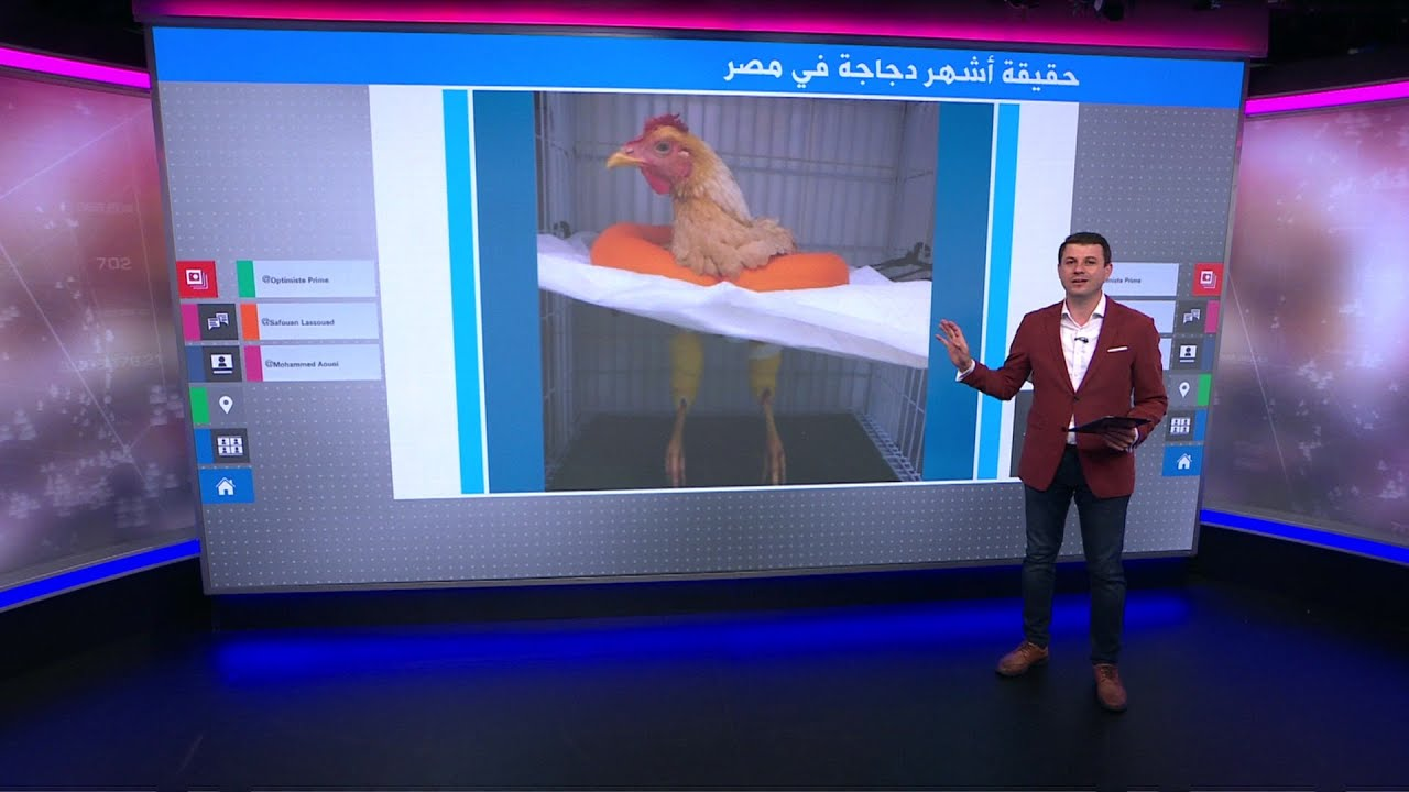 كذبة عالمية أشهر دجاجة في مصر طلعت في البرازيل